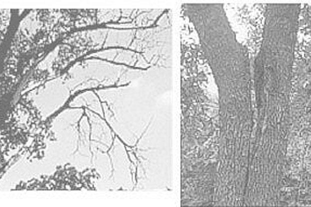 Identify and manage hazardous tree defects
