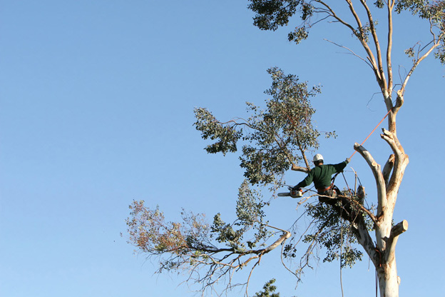 Things to consider for tree removal melbourne