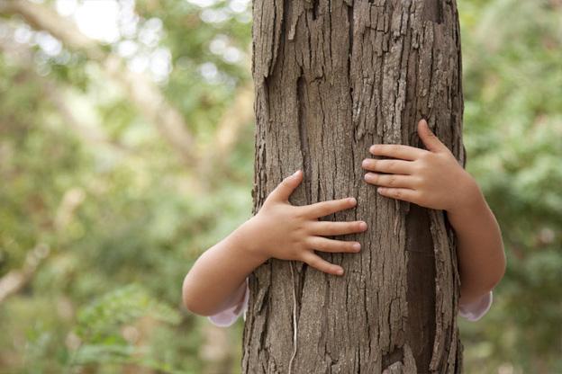 Tree care services melbourne