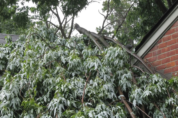 Tree removal service melbourne