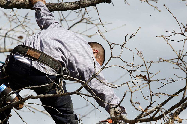 Professional tree services melbourne