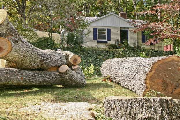 Tree trimming and tree removalists melbourne