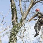 tree pruning companies