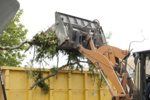tree removal ringwood