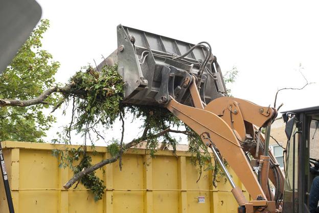 Tree removal ringwood