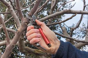 tree pruning lilydale