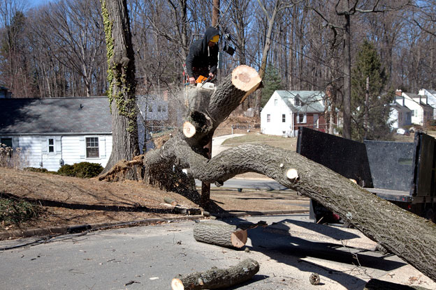 Tree removal lilydale