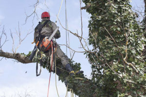 tree pruning box hill