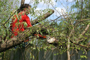 Tree Removal and Pruning Services in Surrey Hills
