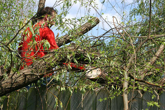 Tree removal and tree removing melbourne