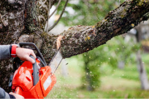 Need for Professional Tree Removal Service in Melbourne