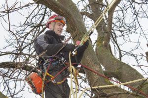 arborist using chainsaw