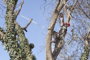 Hazardous Tree Assessments