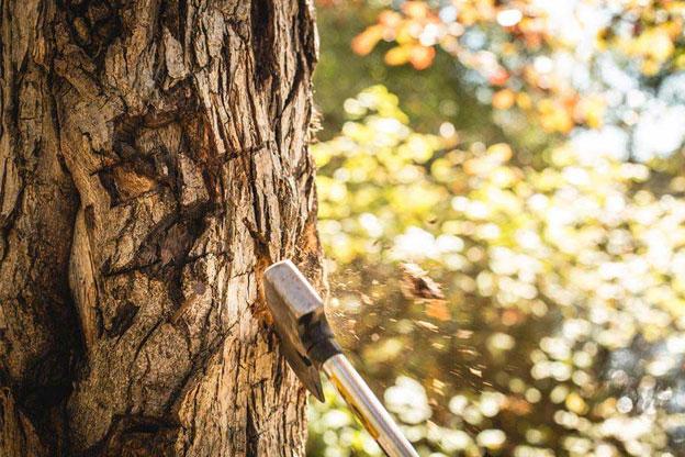Tree removal permit melbourne