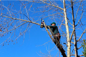 Tree Pruning MPrune and Prepare your Trees for 2018elbourne