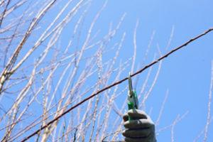 Should I prune my fruit trees in winter
