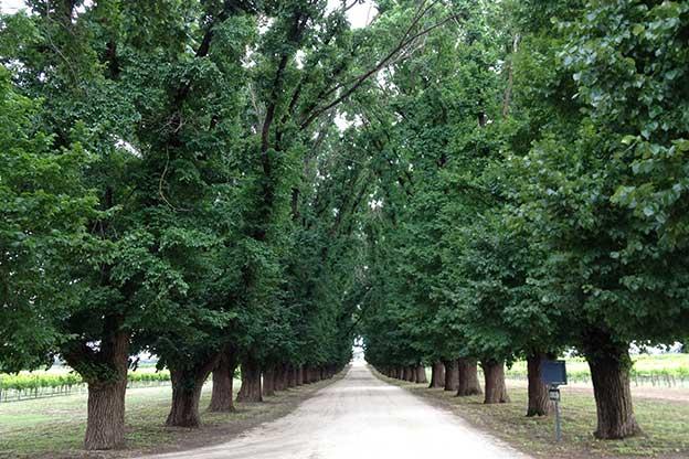 Arborist Reports Surveys