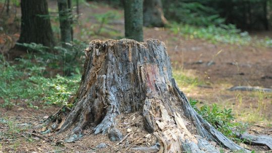 importance-tree-stump-removal