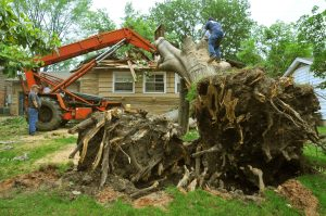 Removing tree from home