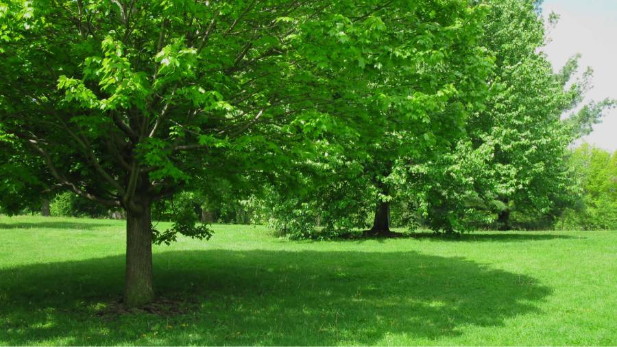 Tree care services for shade trees