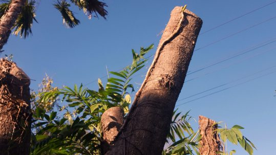 lopping-and-tree-pruning-img