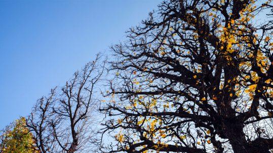winter-tree-trimming-img