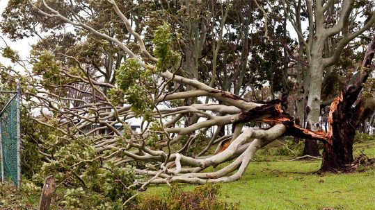 Signs you need a tree removal service