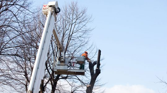 Choosing-the-right-tree-pruning-techniques-for-your-tree-img